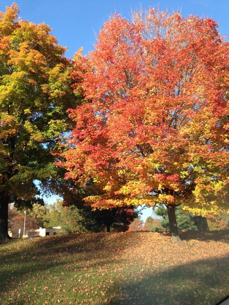 fall tree.